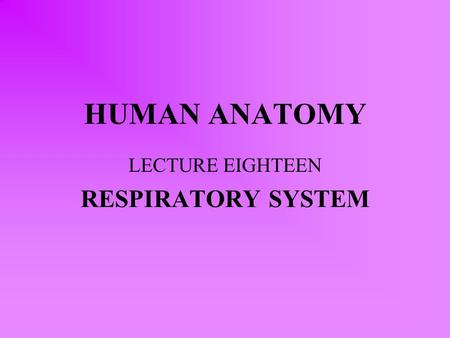 HUMAN ANATOMY LECTURE EIGHTEEN RESPIRATORY SYSTEM.