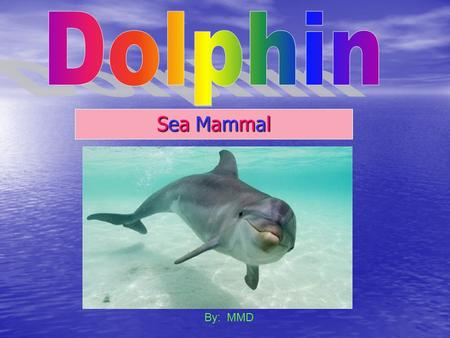 Dolphin Sea Mammal By: MMD.