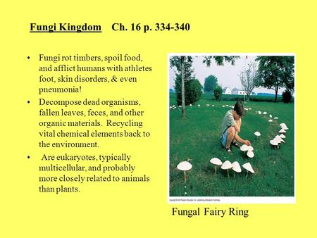 Fungi Kingdom Ch. 16 p. 334-340 Fungi rot timbers, spoil food, and afflict humans with athletes foot, skin disorders, & even pneumonia! Decompose dead.