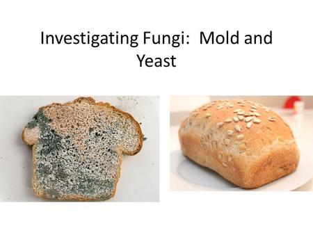 Investigating Fungi: Mold and Yeast