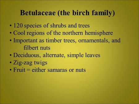 Betulaceae (the birch family) 120 species of shrubs and trees Cool regions of the northern hemisphere Important as timber trees, ornamentals, and filbert.