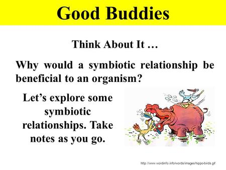 Good Buddies Think About It … Why would a symbiotic relationship be beneficial to an organism?  Let's.