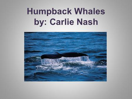 Humpback Whales by: Carlie Nash. Do you ever wonder about humpback whales?