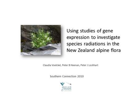 Using studies of gene expression to investigate species radiations in the New Zealand alpine flora Southern Connection 2010 Claudia Voelckel, Peter B Heenan,
