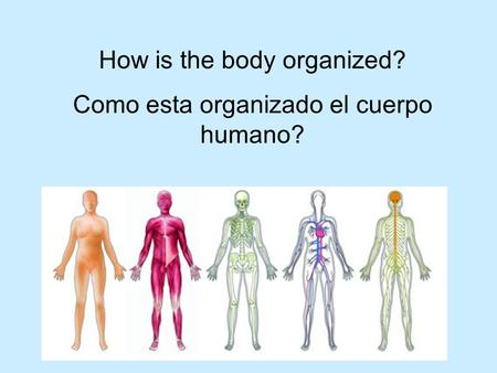 How is the body organized? Como esta organizado el cuerpo humano?