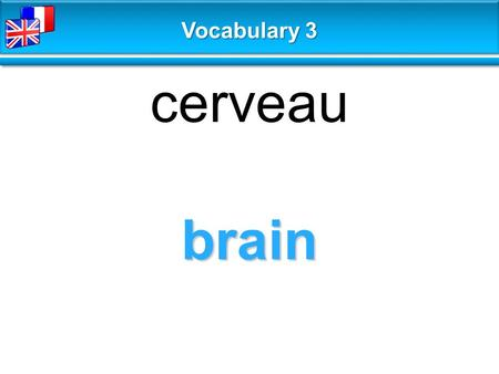 Brain cerveau Vocabulary 3. make sense faire sens, être logique Vocabulary 3.