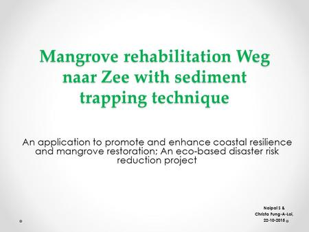 Mangrove rehabilitation Weg naar Zee with sediment trapping technique