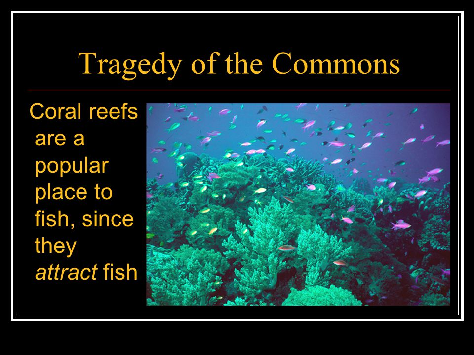 Tragedy of the Commons One popular form of fishing near coral reefs is blast fishing, setting off explosions that stun the fish and make them float to the surface: high quantity yield for low effort