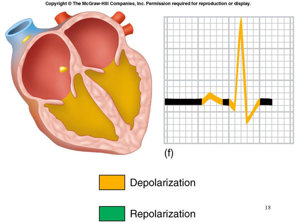 PR interval : From onset of P wave to onset of QRS Normal duration = 0.12-2.0 sec (120-200 ms) (3-4 horizontal boxes) Represents atria to ventricular conduction time (through His bundle) Prolonged PR interval may indicate a 1st degree heart block 19