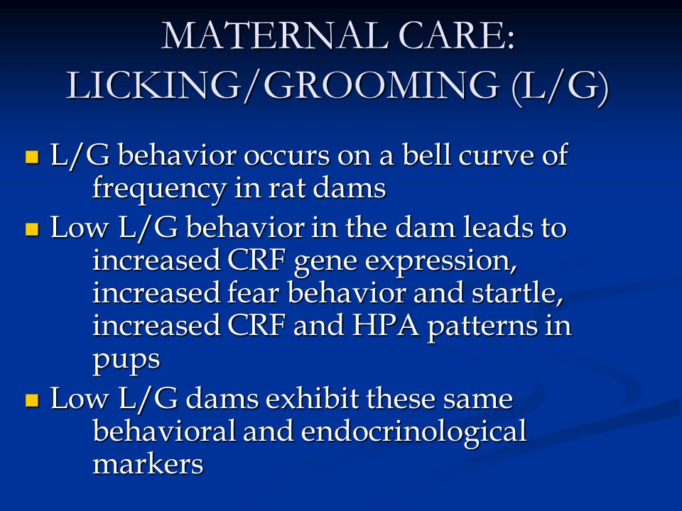 MATERNAL CARE: LICKING/GROOMING (L/G) Female pups exhibit the same L/G behavior as their dam, as do their own offspring.