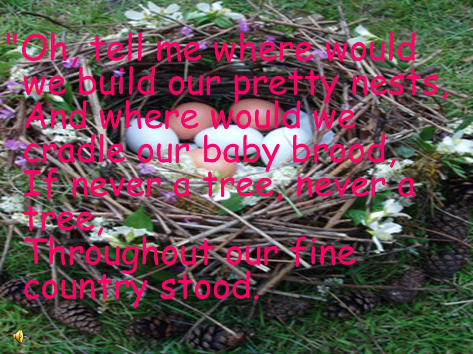 Oh, tell me where would we build our pretty nests, And where would we cradle our baby brood, If never a tree, never a tree, Throughout our fine country stood.