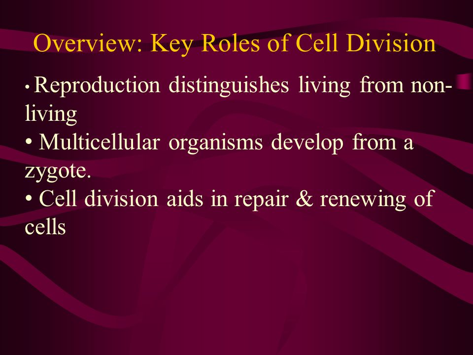 Overview: Key Roles of Cell Division Cell division results in genetically identical daughter cells.