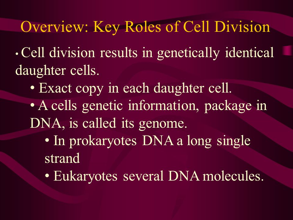 Overview: Key Roles of Cell Division In meiosis gametes are produced (egg & sperm cells).