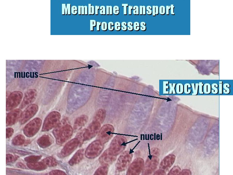 Secretion describes the use of exocytosis by a large number of cells.