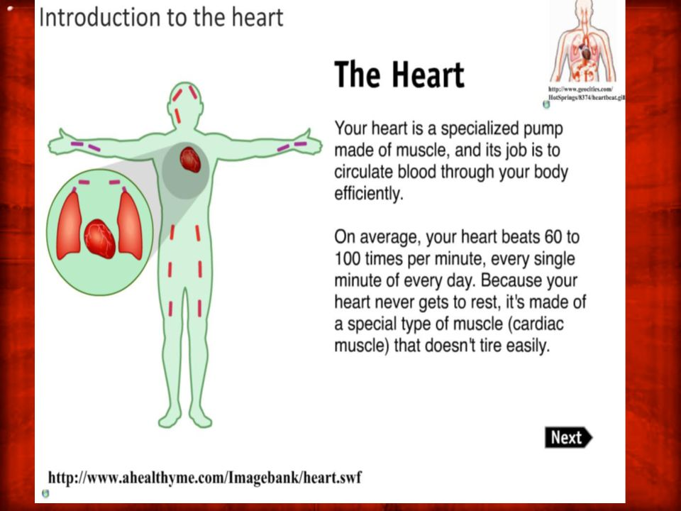 6.2.1 Draw and label a diagram of the heart showing the four chambers, associated blood vessels, valves & the route of blood through the heart!.