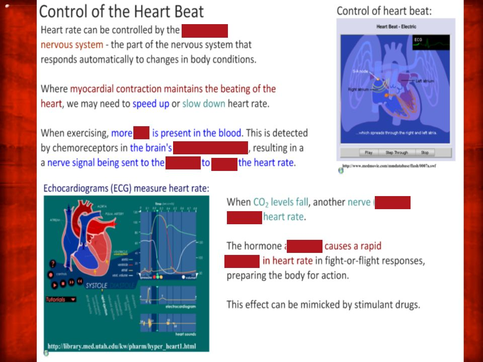 6.2.5 Explain the relationship between the structure and function of arteries, capillaries and veins.