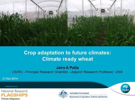 Crop adaptation to future climates: Climate ready wheat Jairo A Palta CSIRO - Principal Research Scientist – Adjunct Research Professor, UWA 21 Nov 2014.