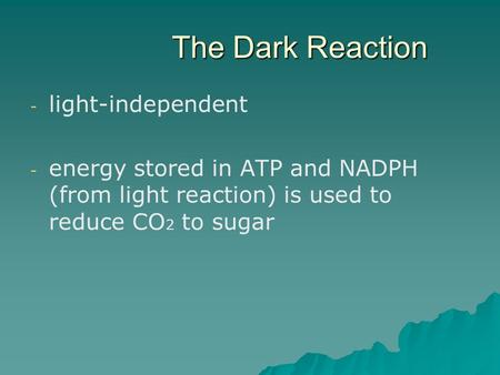 The Dark Reaction - - light-independent - - energy stored in ATP and NADPH (from light reaction) is used to reduce CO 2 to sugar.