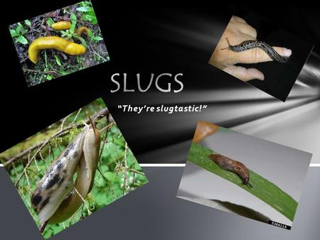 """They're slugtastic!"". Where do slugs live? We love to live in moist areas."