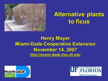 Alternative plants to ficus Henry Mayer Miami-Dade Cooperative Extension November 14, 2007