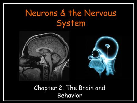 Neurons & the Nervous System Chapter 2: The Brain and Behavior.