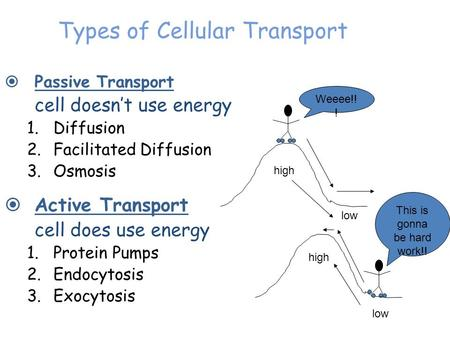Types of Cellular Transport  Passive Transport cell doesn't use energy 1.Diffusion 2.Facilitated Diffusion 3.Osmosis  Active Transport cell does use.