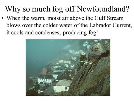 Why so much fog off Newfoundland? When the warm, moist air above the Gulf Stream blows over the colder water of the Labrador Current, it cools and condenses,