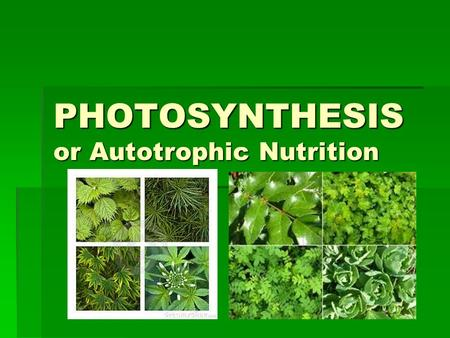 PHOTOSYNTHESIS or Autotrophic Nutrition. PHOTOSYNTHESIS.
