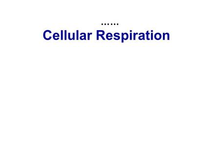 Cellular Respiration ……. Nearly all the cells in our body break down sugars to provide the energy to make ATP Most cells of most organisms obtain energy.