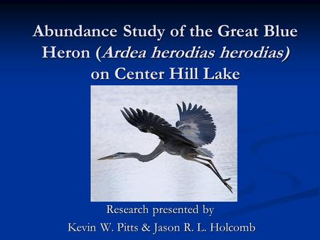 Abundance Study of the Great Blue Heron (Ardea herodias herodias) on Center Hill Lake Research presented by Kevin W. Pitts & Jason R. L. Holcomb Kevin.