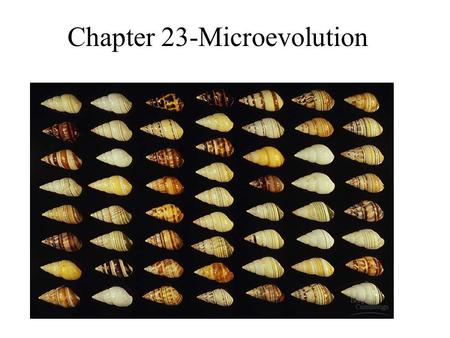Chapter 23-Microevolution. Population genetics Population: a localized group of individuals belonging to the same species Species: a group of populations.