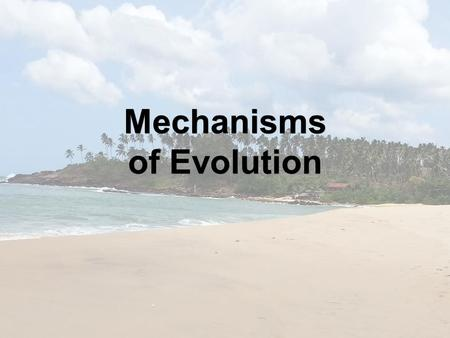 Mechanisms of Evolution. There are several: 1.Natural Selection 2.Gene Flow 3.Genetic drift 4.Mutations 5.Non-random mating There are several: 1.Natural.