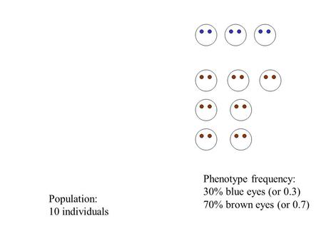 Population: 10 individuals Phenotype frequency: 30% blue eyes (or 0.3) 70% brown eyes (or 0.7)