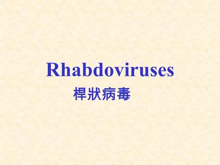 Rhabdoviruses 桿狀病毒. I. Classification Genus –Lyssavirus : rabies virus ( 狂犬病毒屬 ) Three rabies-like viruses.