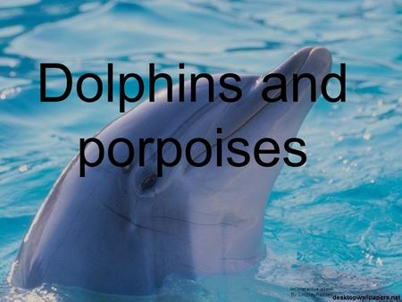 Dolphins and porpoises An interactive lesson By: Lindsey Redden.