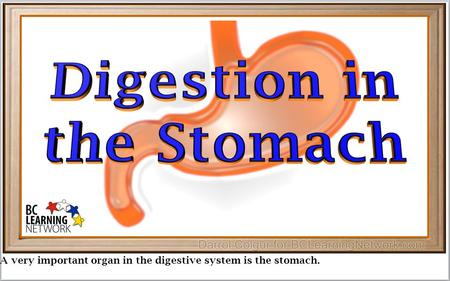 A very important organ in the digestive system is the stomach.