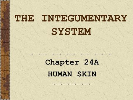 THE INTEGUMENTARY SYSTEM Chapter 24A HUMAN SKIN. Skin Stats … Approx 1.9 square meters (about 18 sq. feet) of skin cover the body Average thickness is.
