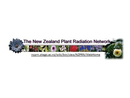 Species delimitation in recent New Zealand species radiations