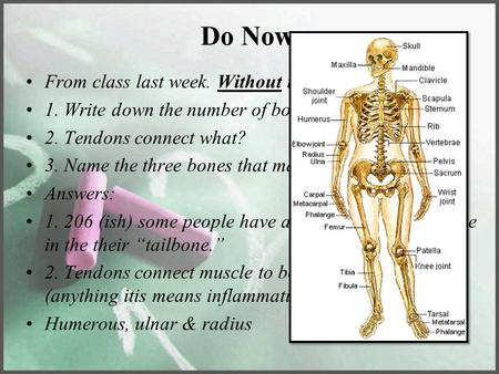 Do Now From class last week. Without the use of your notes 1. Write down the number of bones in the body. 2. Tendons connect what? 3. Name the three bones.