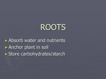 ROOTS ► Absorb water and nutrients ► Anchor plant in soil ► Store carbohydrates/starch.