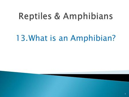 13.What is an Amphibian? 1. One group of vertebrate animals is the amphibians 2 Vocabulary: amphibians A cold-blooded vertebrate animal that lays eggs.
