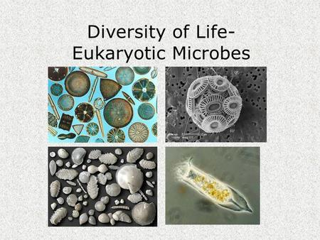 Diversity of Life- Eukaryotic Microbes. Diversity of Life Kingdom.