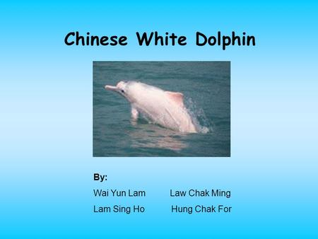Chinese White Dolphin By: Wai Yun Lam Law Chak Ming Lam Sing Ho Hung Chak For.