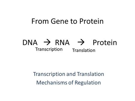 From Gene to Protein Transcription and Translation Mechanisms of Regulation DNA  RNA  Protein Transcription Translation.