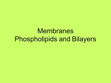 Membranes Phospholipids and Bilayers. What do cell membranes consist of? Experiment: ABCDEF 10 cc of milk 10 cc of vinegar 10 cc of oil 10 cc of vinegar.