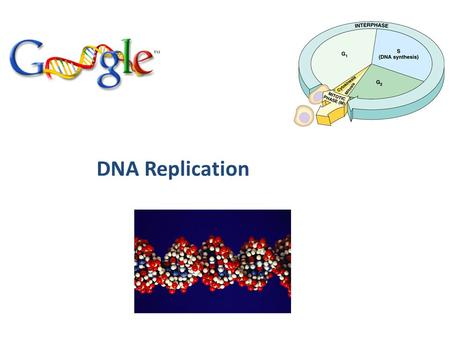 DNA Replication Copying DNA Replication of DNA – base pairing – new strand is 1/2 parent template & 1/2 new DNA semi-conservative copy process.