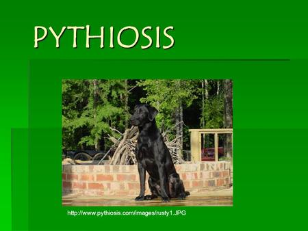 PYTHIOSIS
