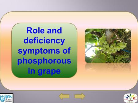 Role and deficiency symptoms of phosphorous in grape.
