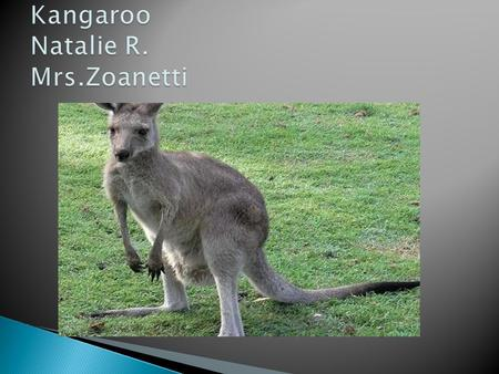  The kangaroo has a pouch to put the baby in.  It has a tail  It can hop  It can be four different colors; red, brown, gray, and white.  It has.