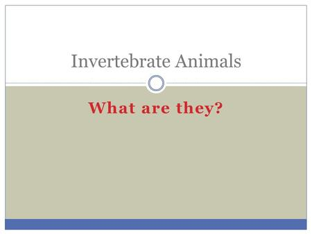 What are they? Invertebrate Animals. Invertebrates Animals that do not have a backbone or any bone tissue. Most are limited in size because of support.
